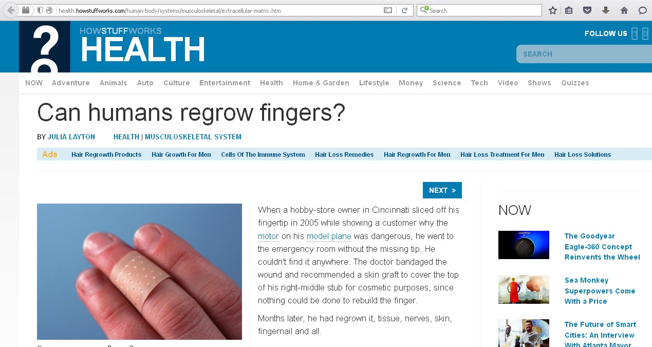 Can Humans Regrow Fingers?